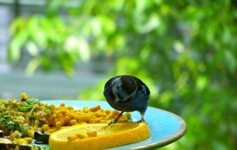 Beautiful bird enjoying lunch!