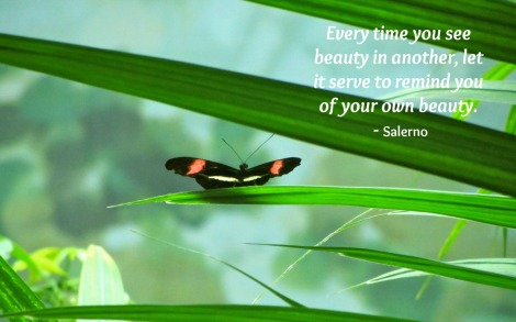 Salerno Quote - Every time you see beauty in another, let it serve to remind you of your own beauty.