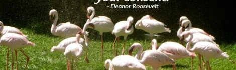 Quote by Eleanor Roosevelt - No one can make you feel inferior without your consent.