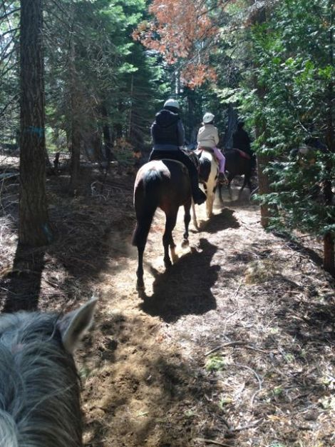 Two women on horse back on a trail ride.