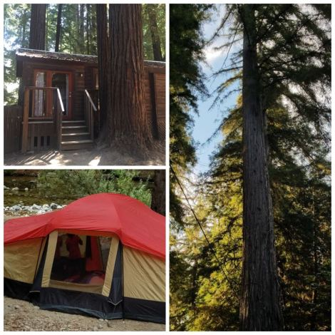 Collage or cabin, tent, and big redwood trees.