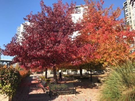 Image of trees and bushes with a variety of beautiful fall colors